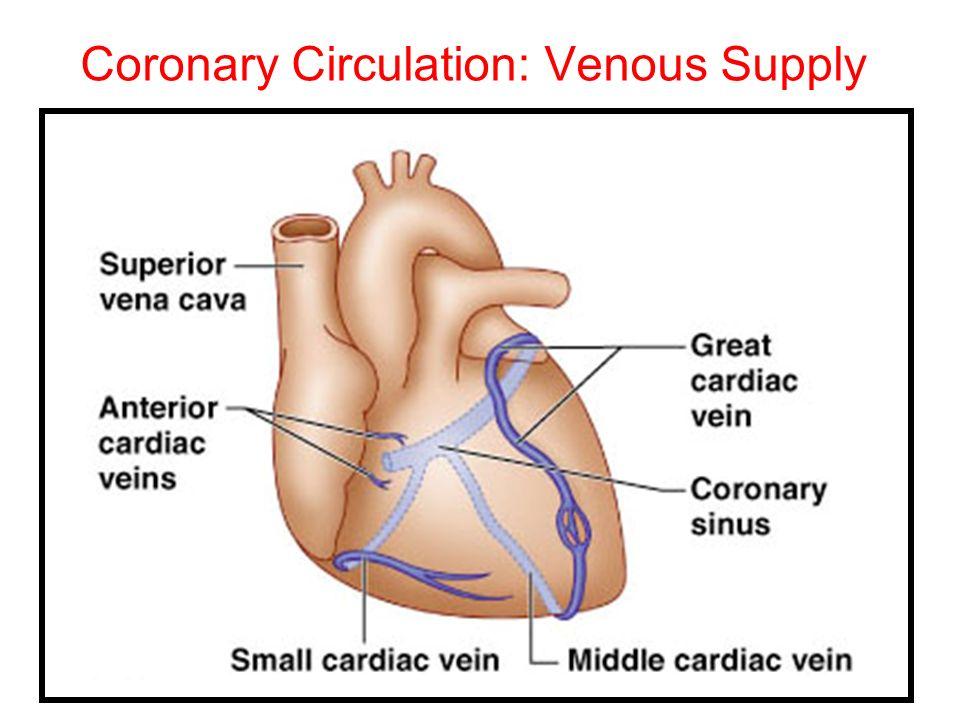 Coronary Circulation: Venous Supply