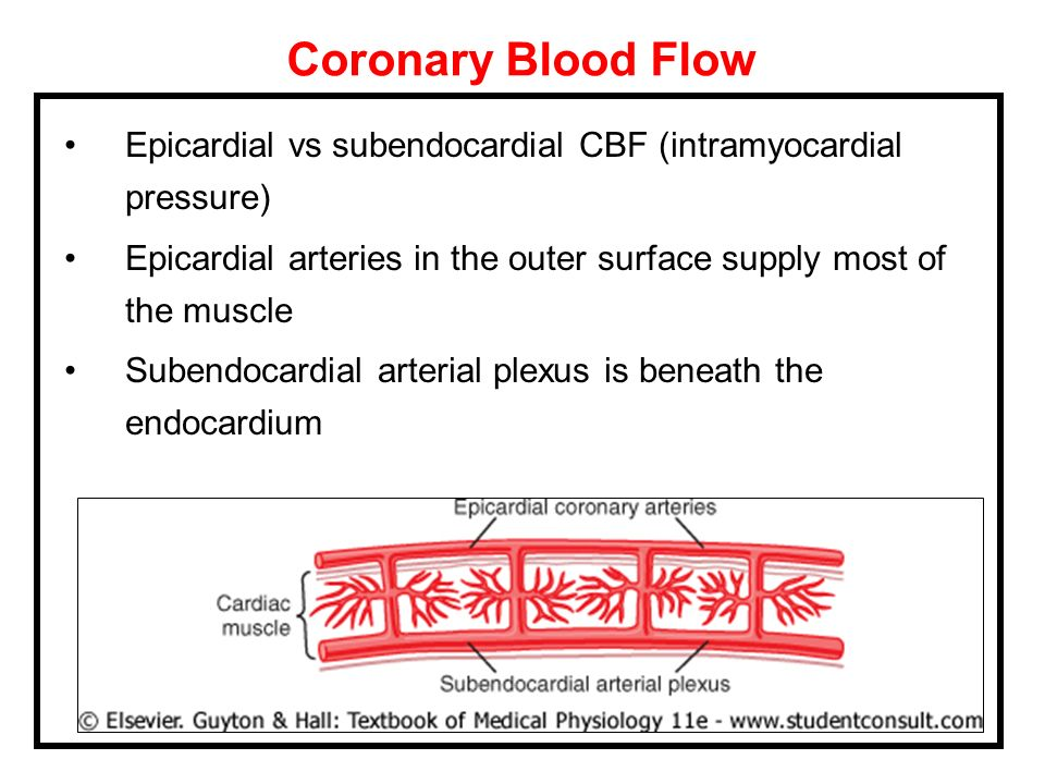 Coronary Blood FlowEpicardial vs subendocardial CBF (intramyocardial pressure) Epicardial arteries in the outer surface supply most of the muscle.