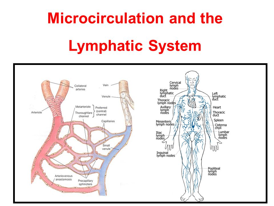 Microcirculation and the Lymphatic System