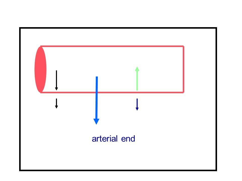 arterial end