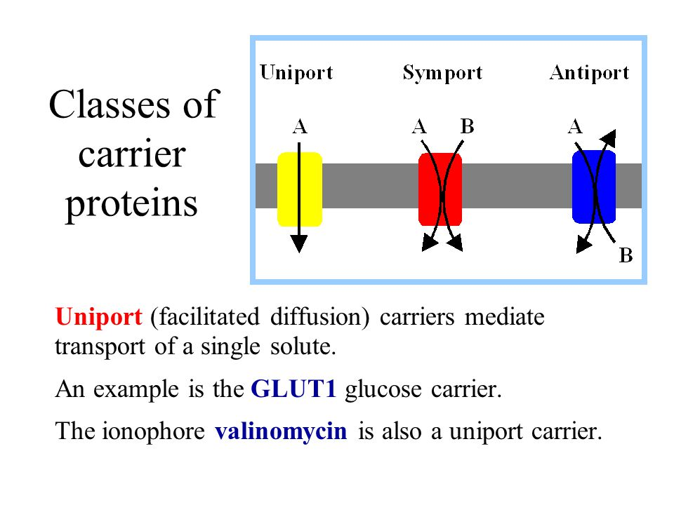 Classes of carrier proteins