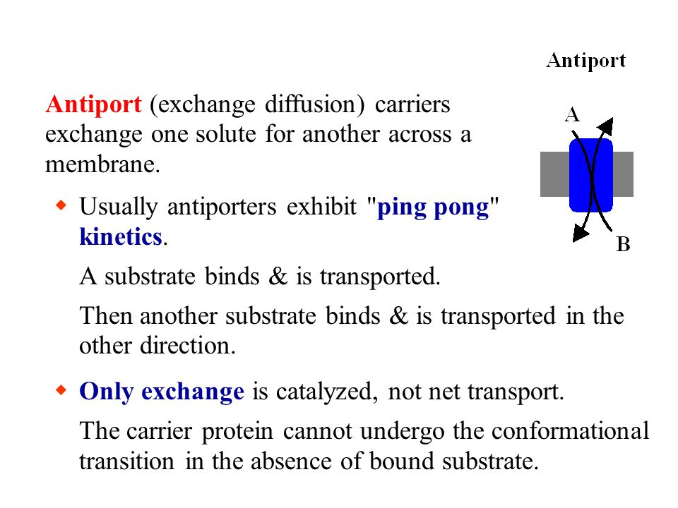Antiport (exchange diffusion) carriers exchange one solute for another across a membrane.