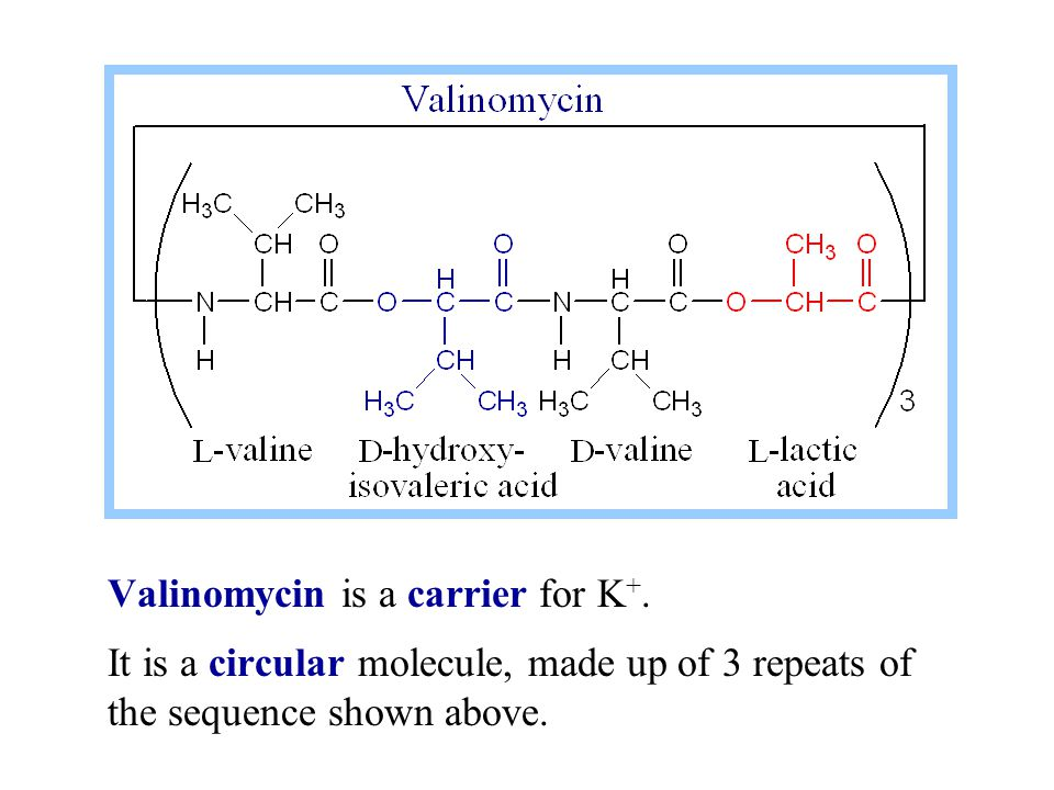 Valinomycin is a carrier for K+.