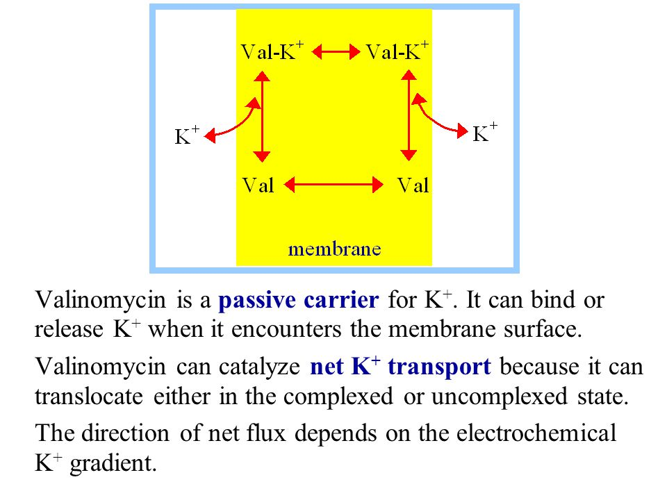 Valinomycin is a passive carrier for K+