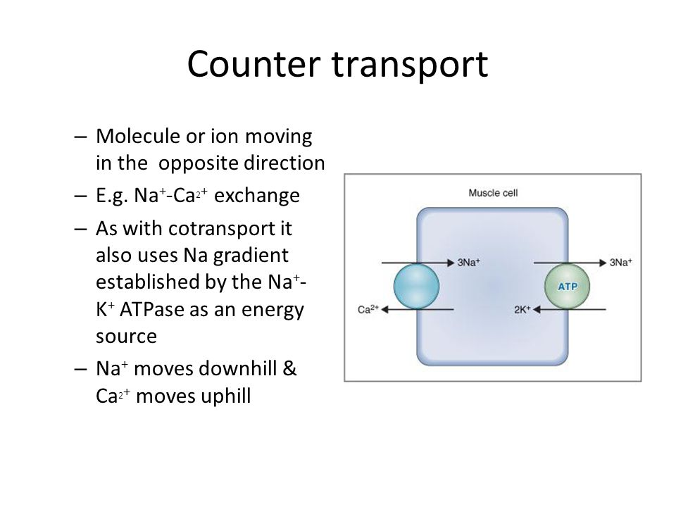Counter transport Molecule or ion moving in the opposite direction