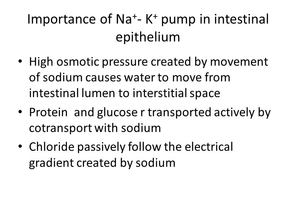 Importance of Na+- K+ pump in intestinal epithelium