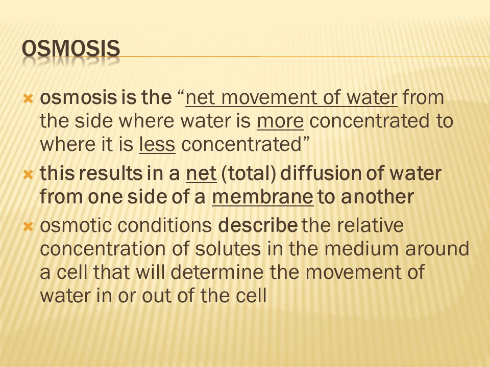 Osmosis osmosis is the net movement of water from the side where water is more concentrated to where it is less concentrated