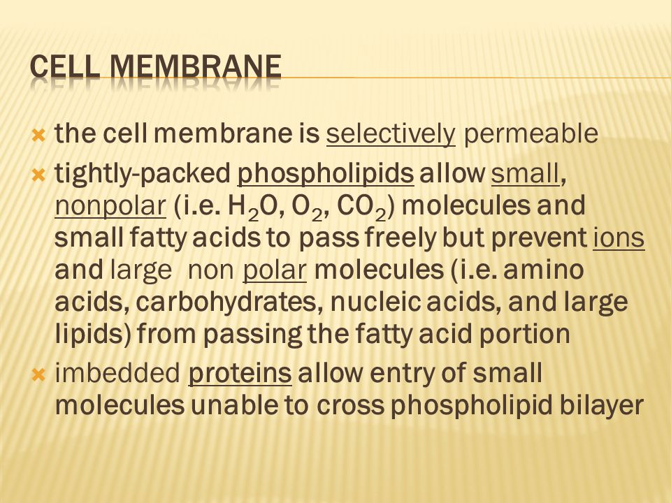 Cell Membrane the cell membrane is selectively permeable