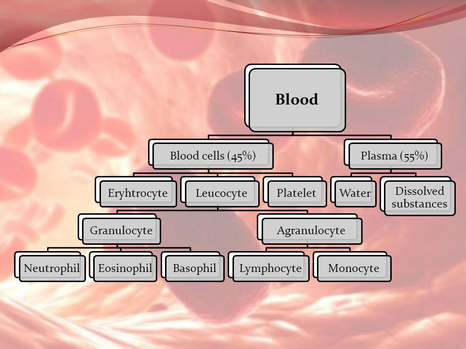 Blood Blood cells (45%) Eryhtrocyte Leucocyte Granulocyte Neutrophil