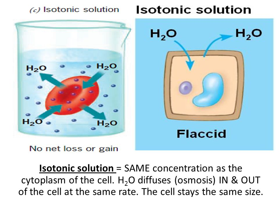 Isotonic solution = SAME concentration as the cytoplasm of the cell
