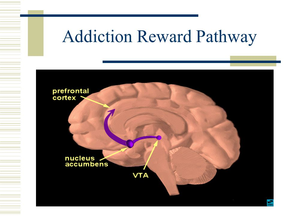 Addiction Reward Pathway
