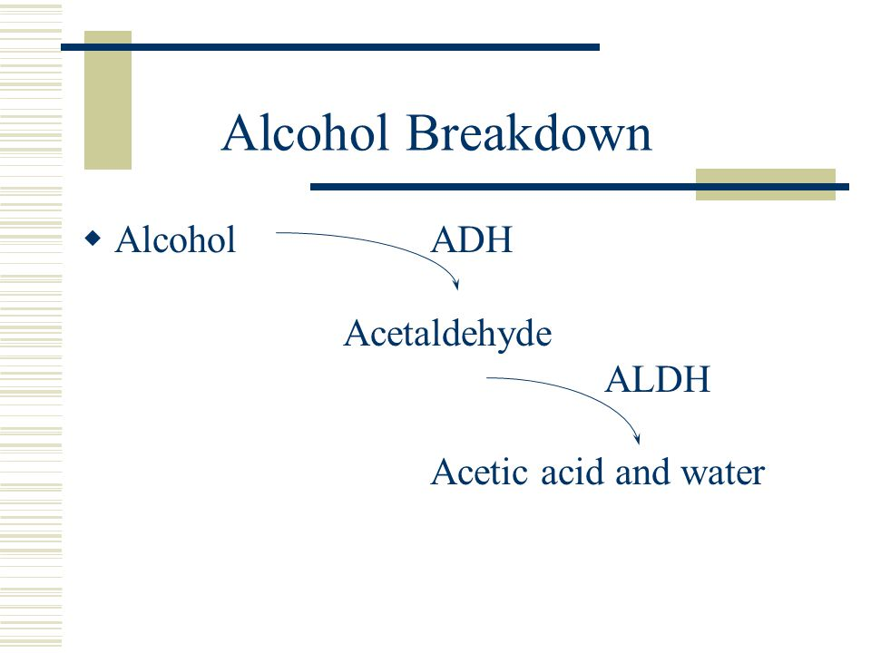 Alcohol Breakdown Alcohol ADH Acetaldehyde ALDH Acetic acid and water.