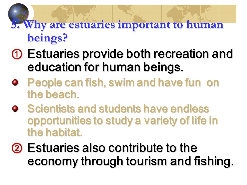 5. Why are estuaries important to human beings