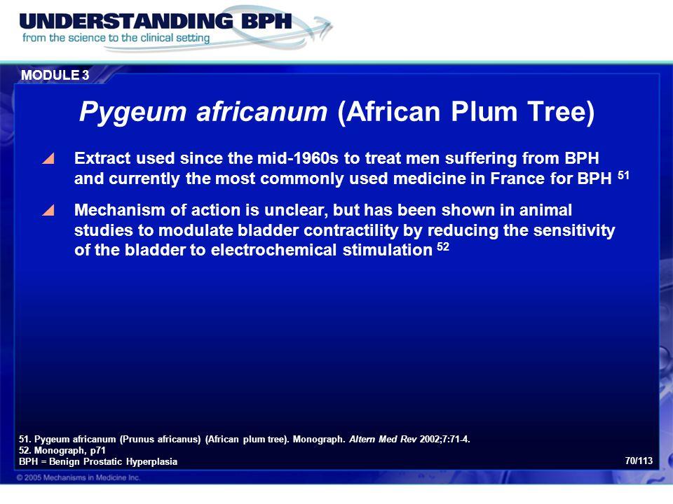 Pygeum africanum (African Plum Tree)