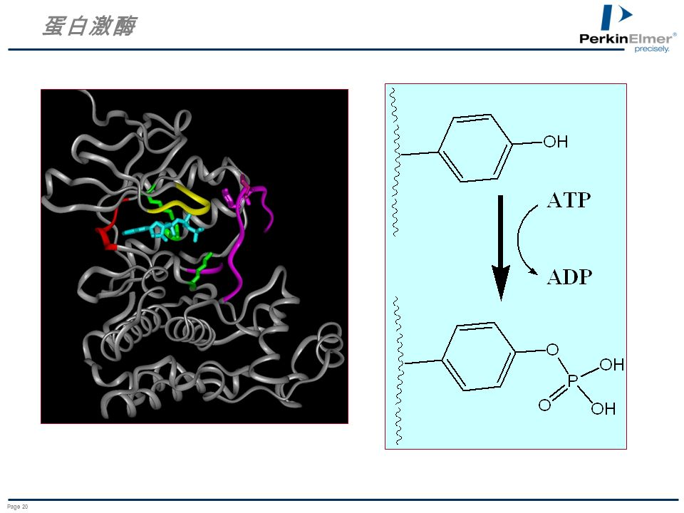 蛋白激酶 Page 20