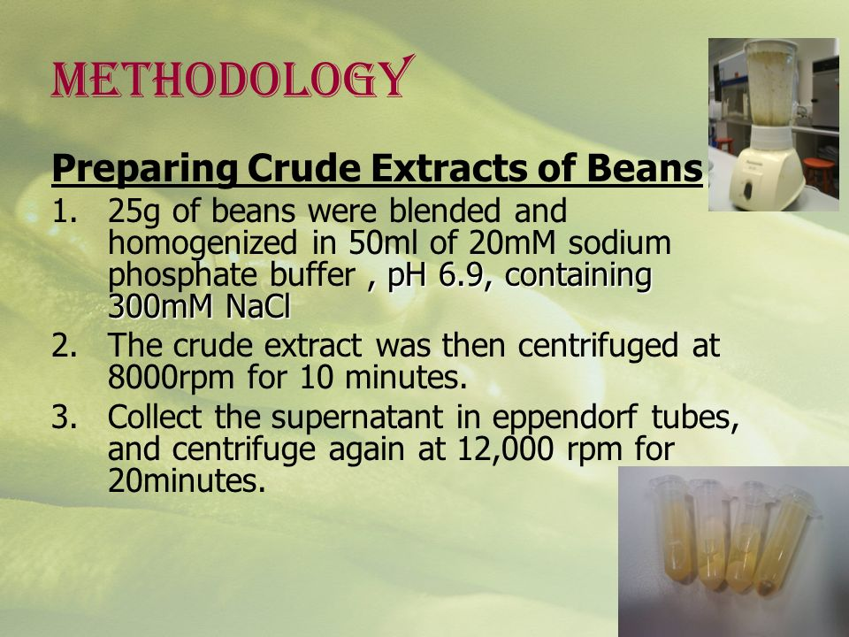 METHODOLOGY Preparing Crude Extracts of Beans