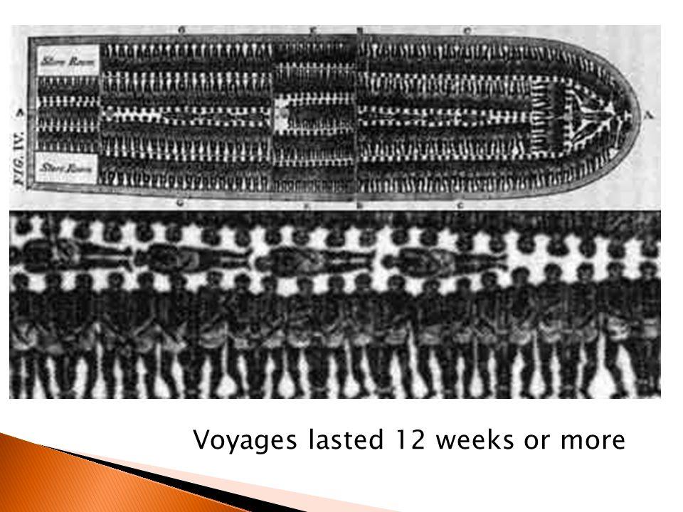 Voyages lasted 12 weeks or more