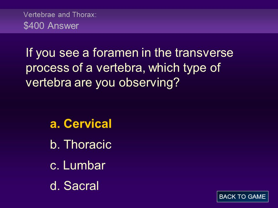 Vertebrae and Thorax: $400 Answer