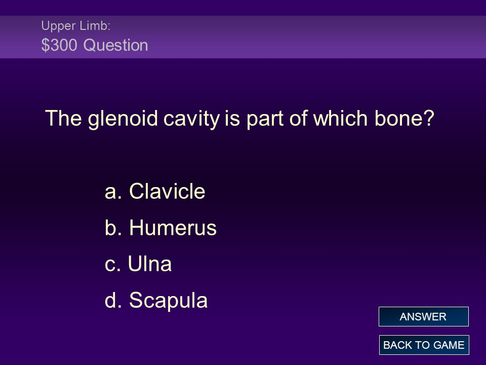 The glenoid cavity is part of which bone