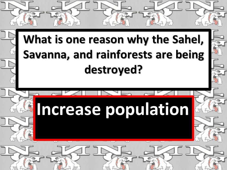 What is one reason why the Sahel, Savanna, and rainforests are being destroyed