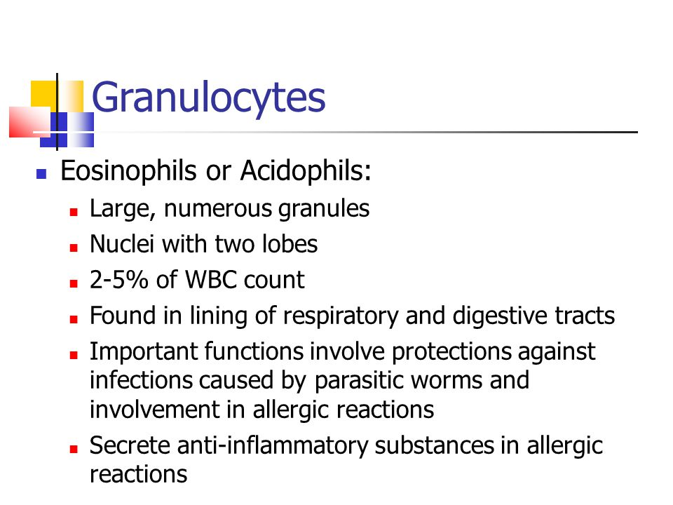 Granulocytes Eosinophils or Acidophils: Large, numerous granules