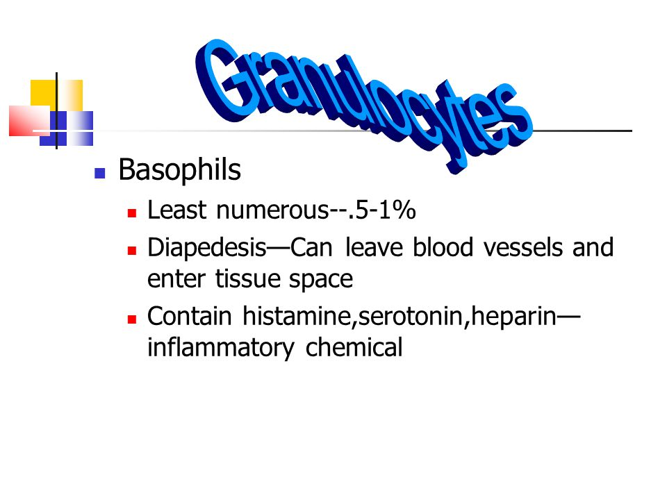 Granulocytes Basophils Least numerous--.5-1%
