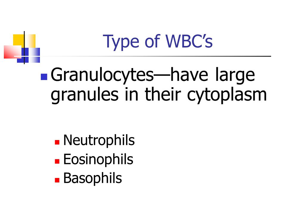 Granulocytes—have large granules in their cytoplasm