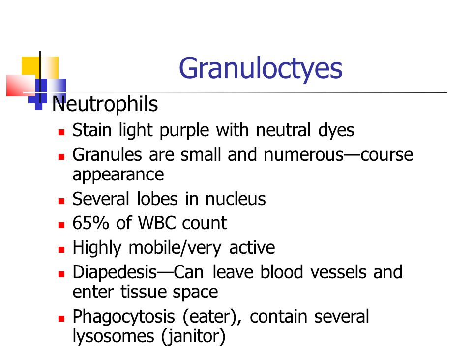Granuloctyes Neutrophils Stain light purple with neutral dyes