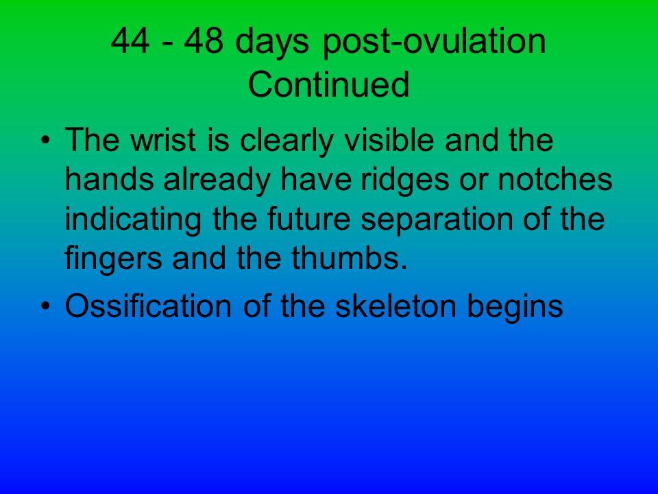 44 - 48 days post-ovulation Continued