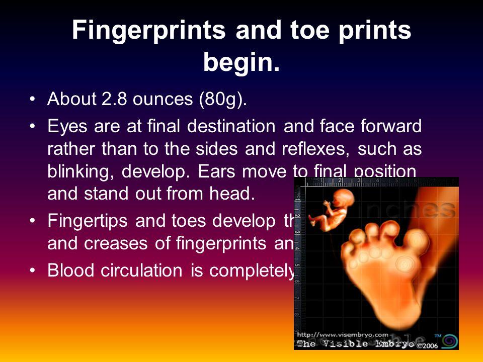 Fingerprints and toe prints begin.