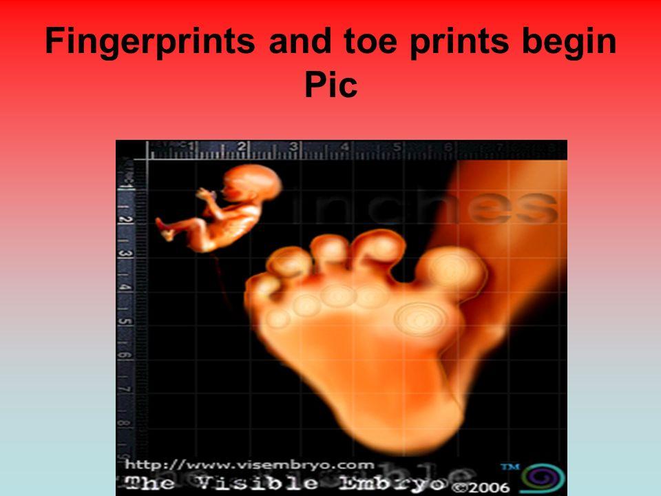 Fingerprints and toe prints begin Pic