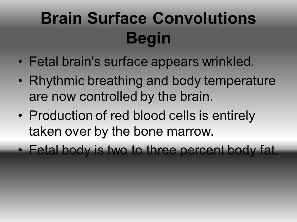 Brain Surface Convolutions Begin