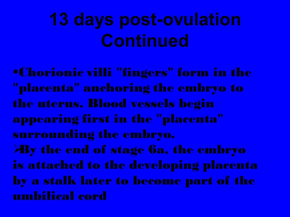13 days post-ovulation Continued