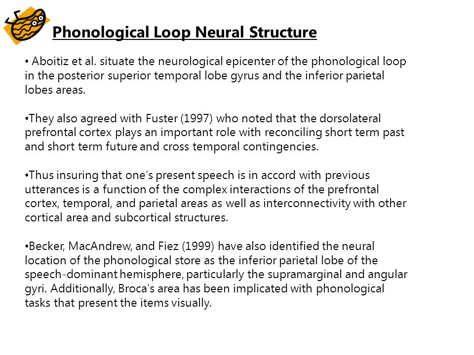 Phonological Loop Neural Structure
