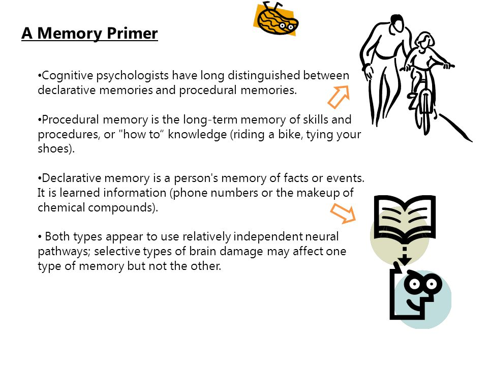A Memory Primer Cognitive psychologists have long distinguished between declarative memories and procedural memories.