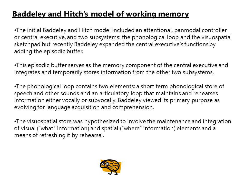 Baddeley and Hitch's model of working memory