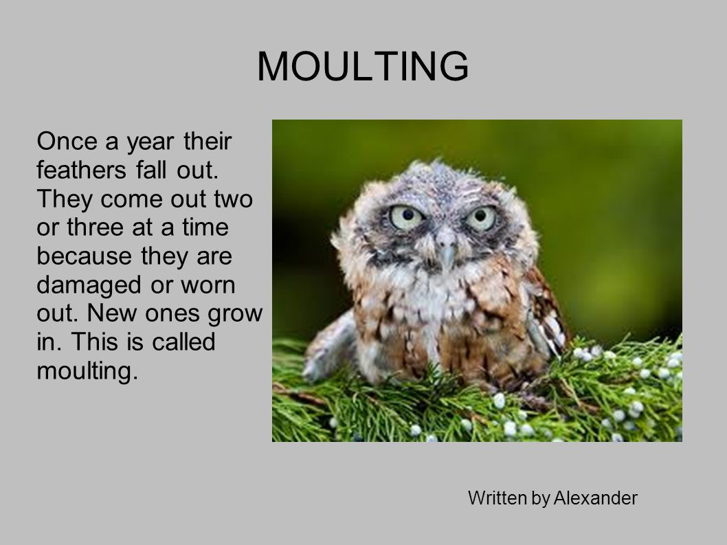 MOULTING