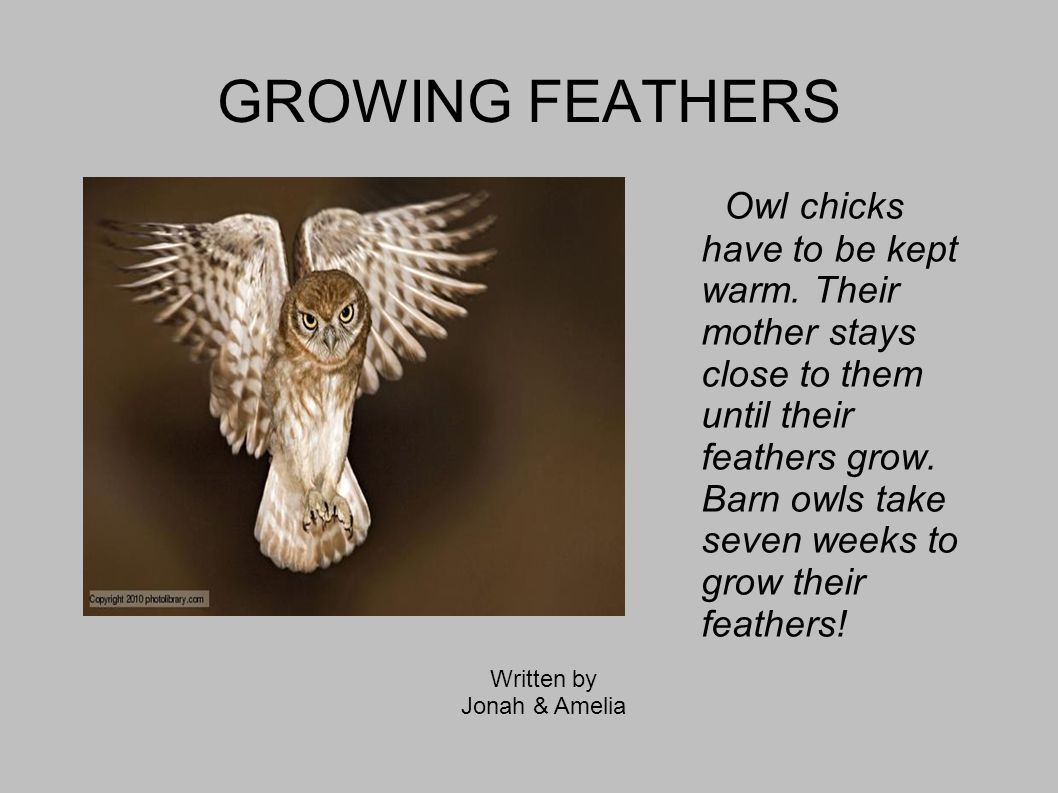 GROWING FEATHERS