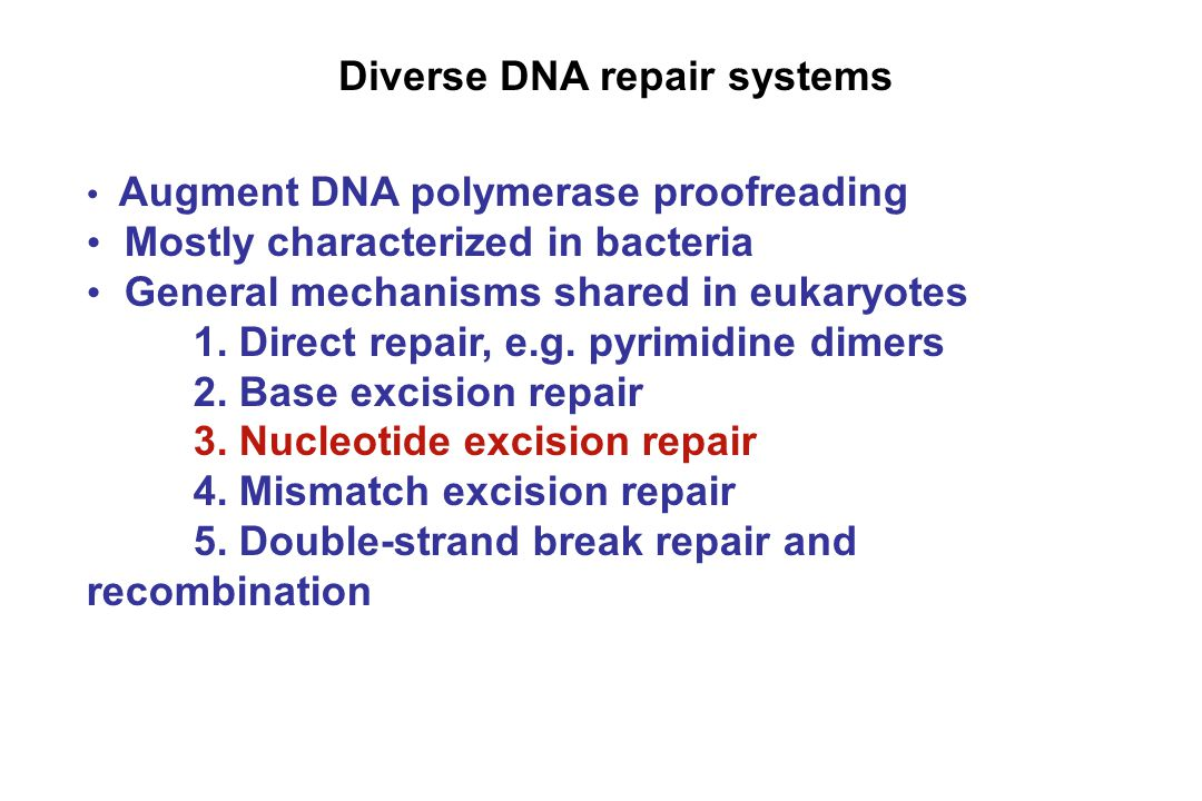 Diverse DNA repair systems