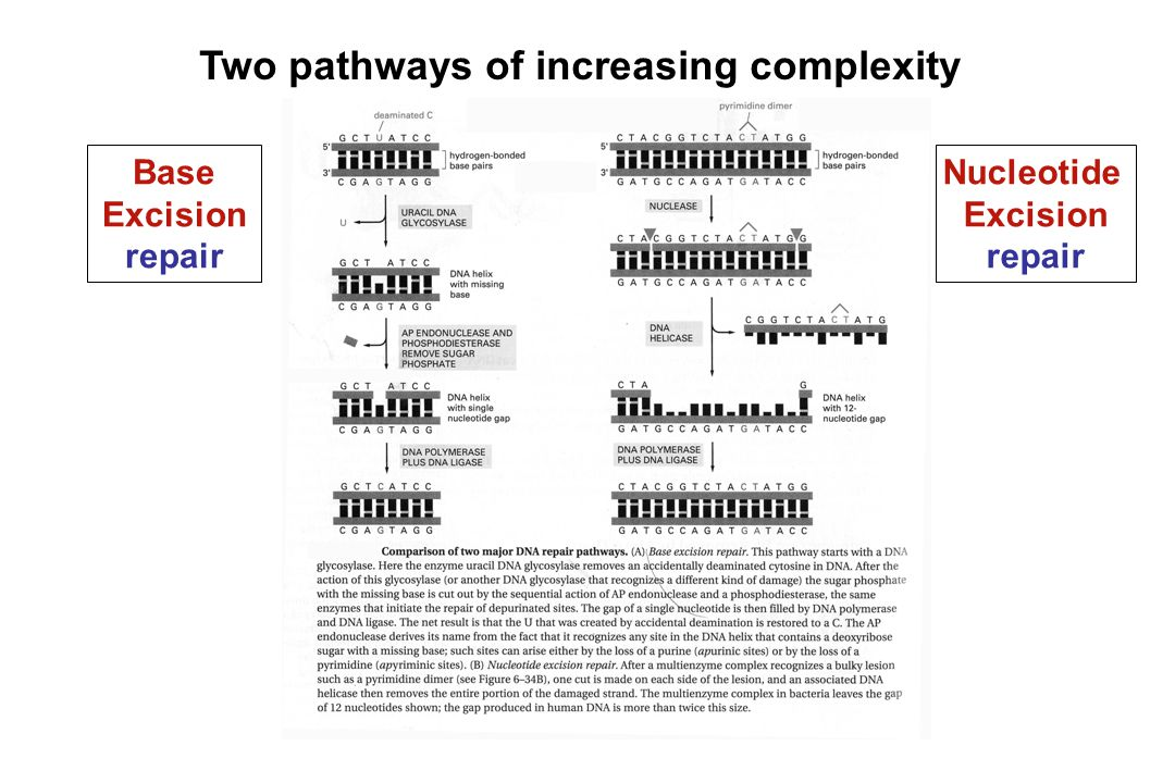 Two pathways of increasing complexity