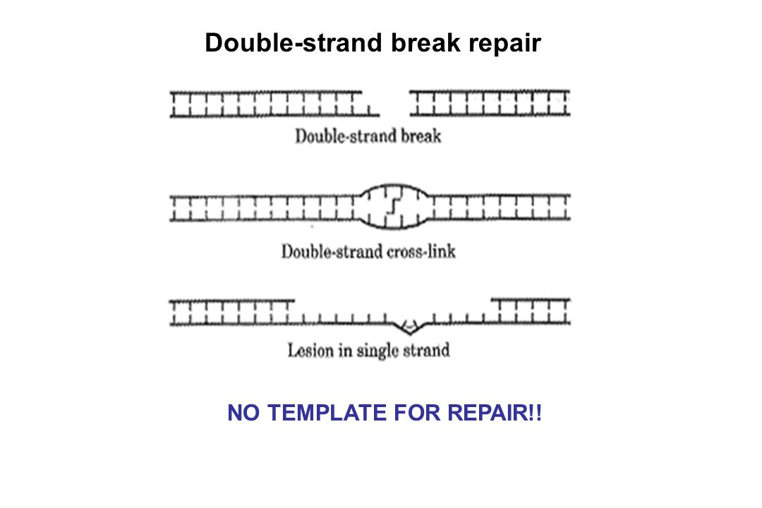 Double-strand break repair
