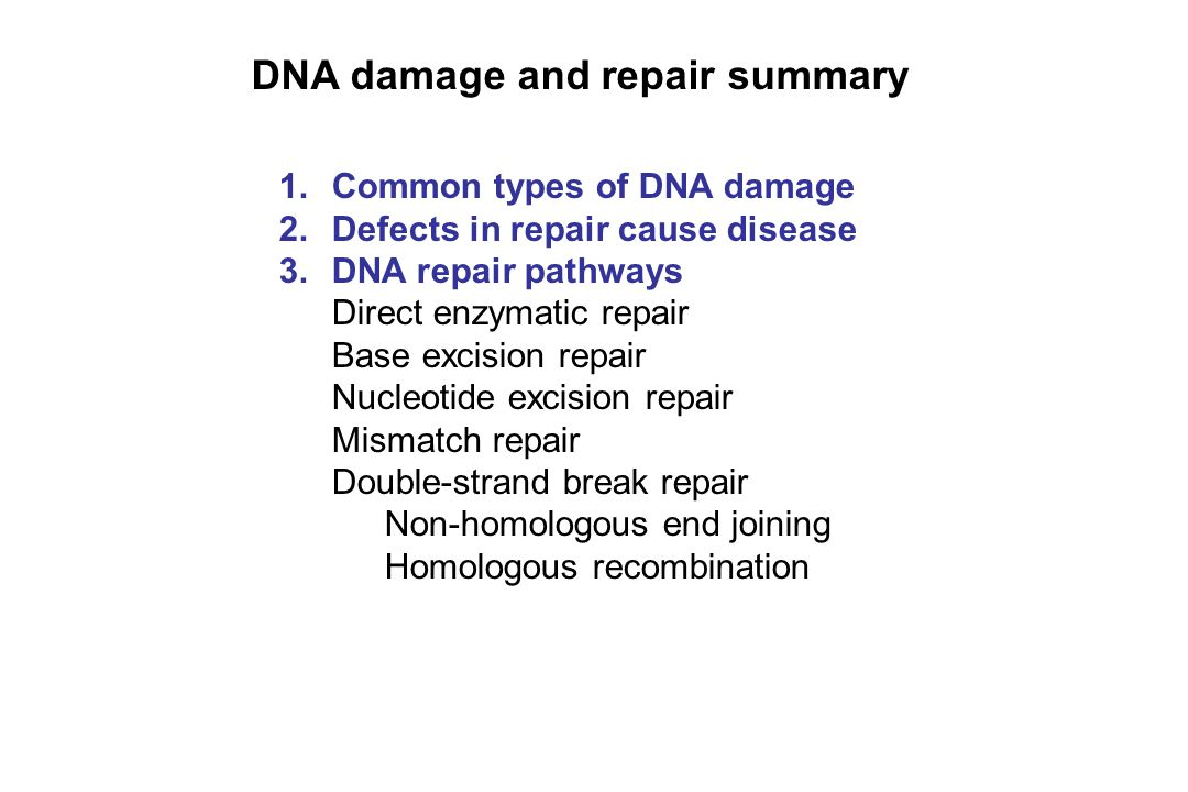 DNA damage and repair summary