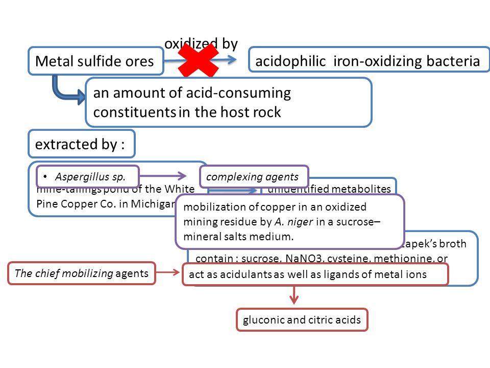 acidophilic iron-oxidizing bacteria
