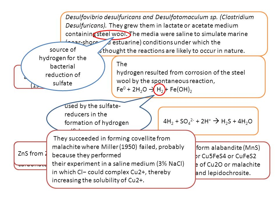 Desulfovibrio desulfuricans and Desulfotomaculum sp. (Clostridium
