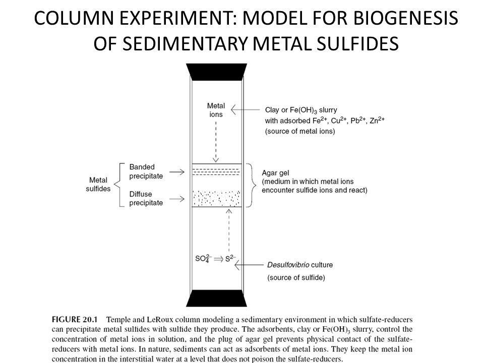 COLUMN EXPERIMENT: MODEL FOR BIOGENESIS OF SEDIMENTARY METAL SULFIDES