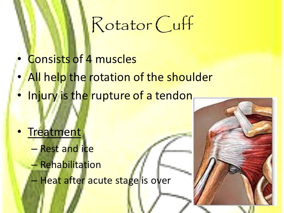 Rotator Cuff Consists of 4 muscles
