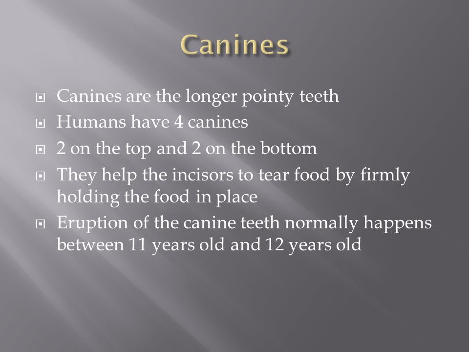 Canines Canines are the longer pointy teeth Humans have 4 canines