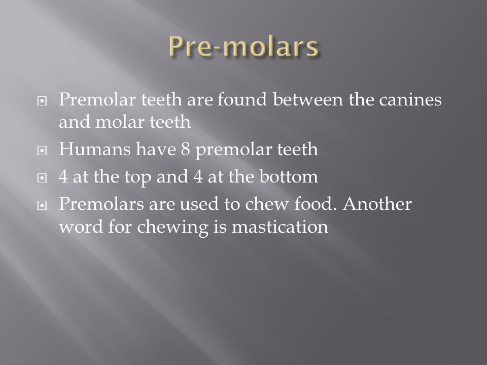 Pre-molars Premolar teeth are found between the canines and molar teeth. Humans have 8 premolar teeth.