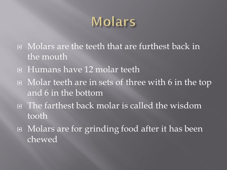 Molars Molars are the teeth that are furthest back in the mouth