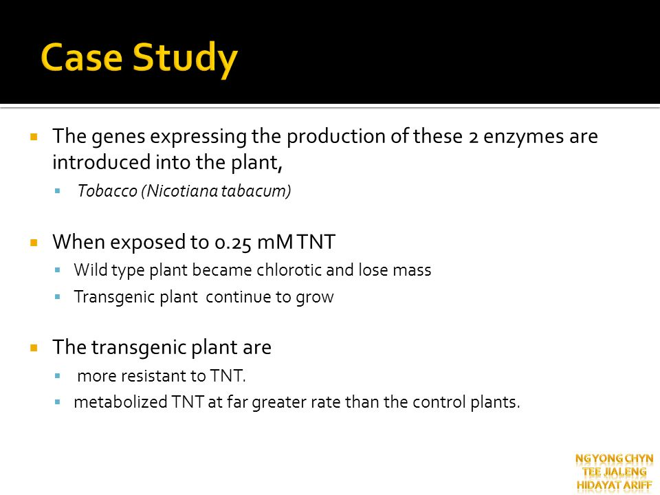 Case Study The genes expressing the production of these 2 enzymes are introduced into the plant, Tobacco (Nicotiana tabacum)